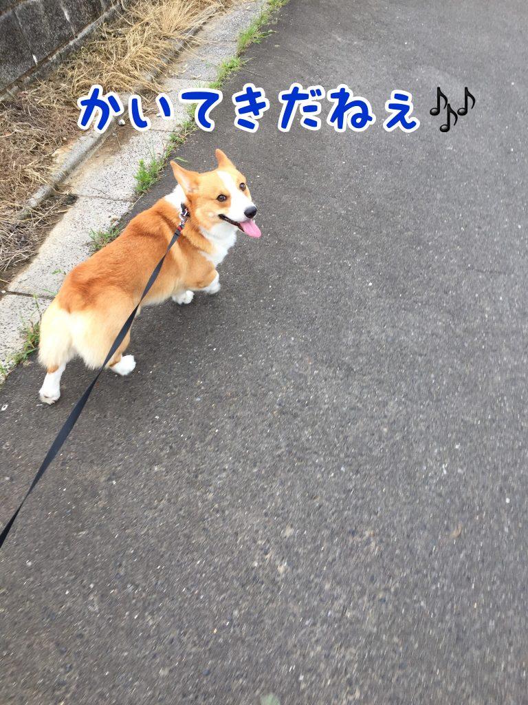 今日のお散歩快適だね