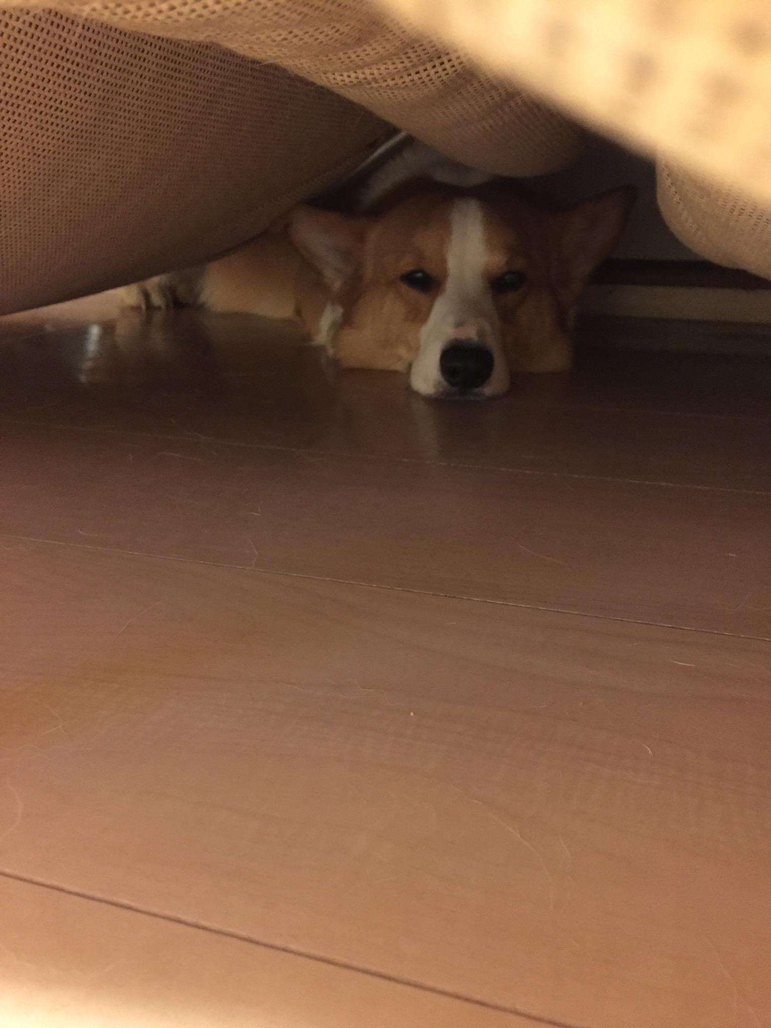 ソファーの下が好きですね
