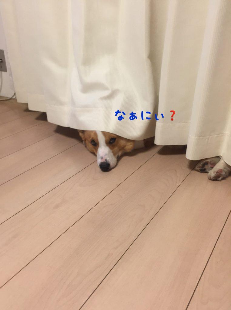 なぁにぃ?