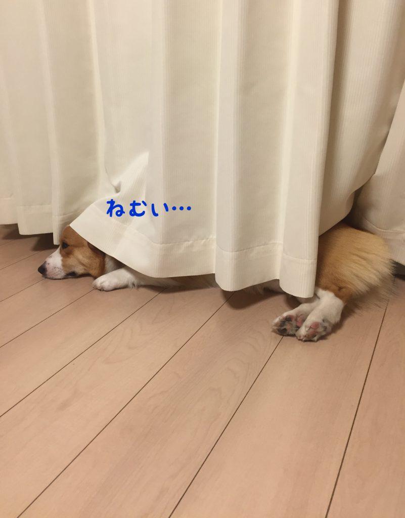 僕は眠いんです