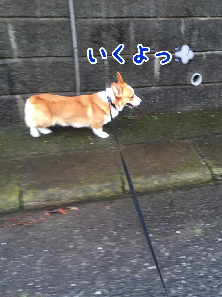 お散歩行くよ