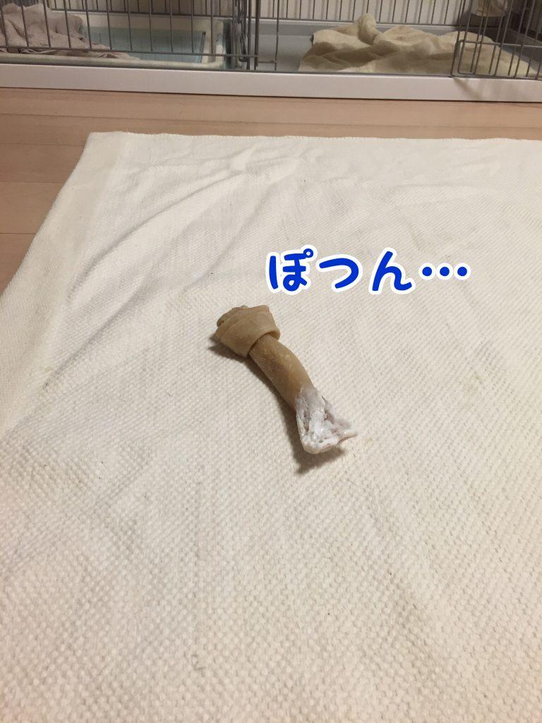 放置される骨ガム