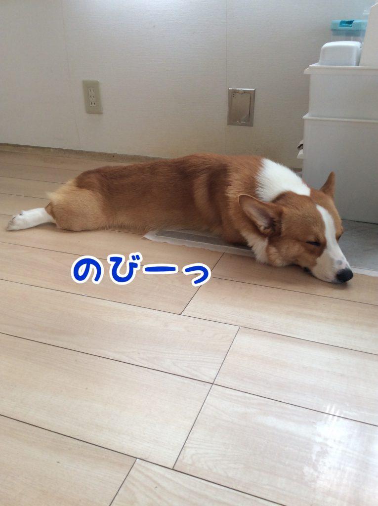 眠いのびー