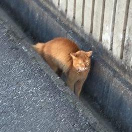 猫に威嚇されるコーギー