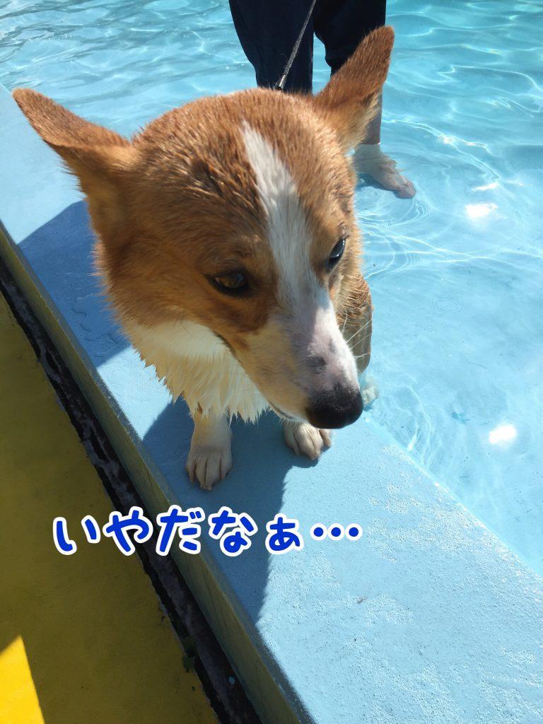 プールやだよ