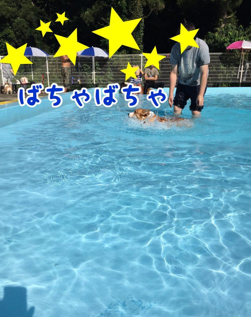 泳ぐの難しい