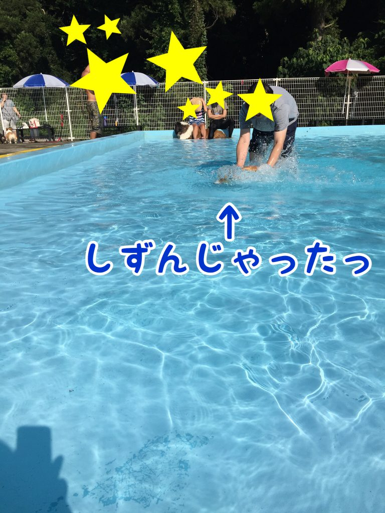 泳ぎの練習をするコーギー