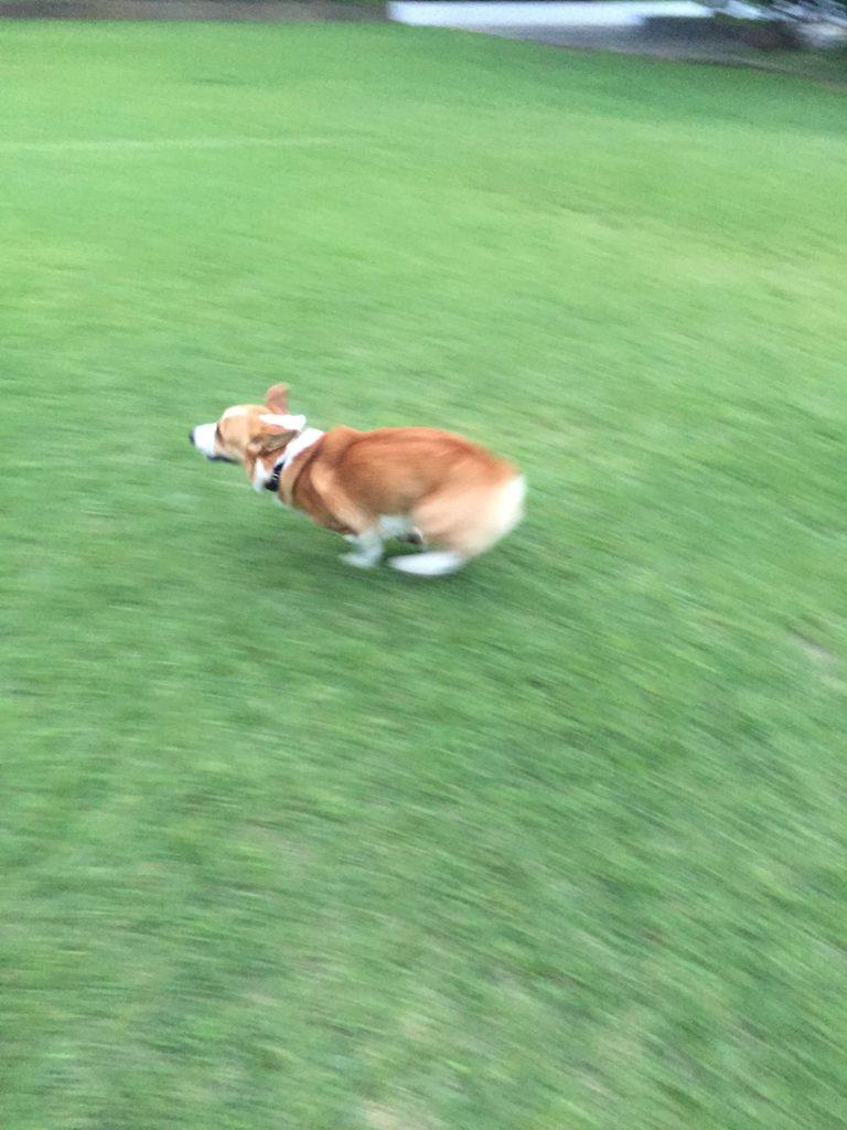 おりゃぁ〜!走るの早いね!