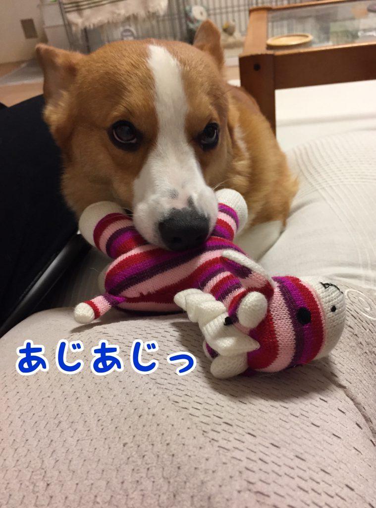 おもちゃ持ってきたよぉ〜