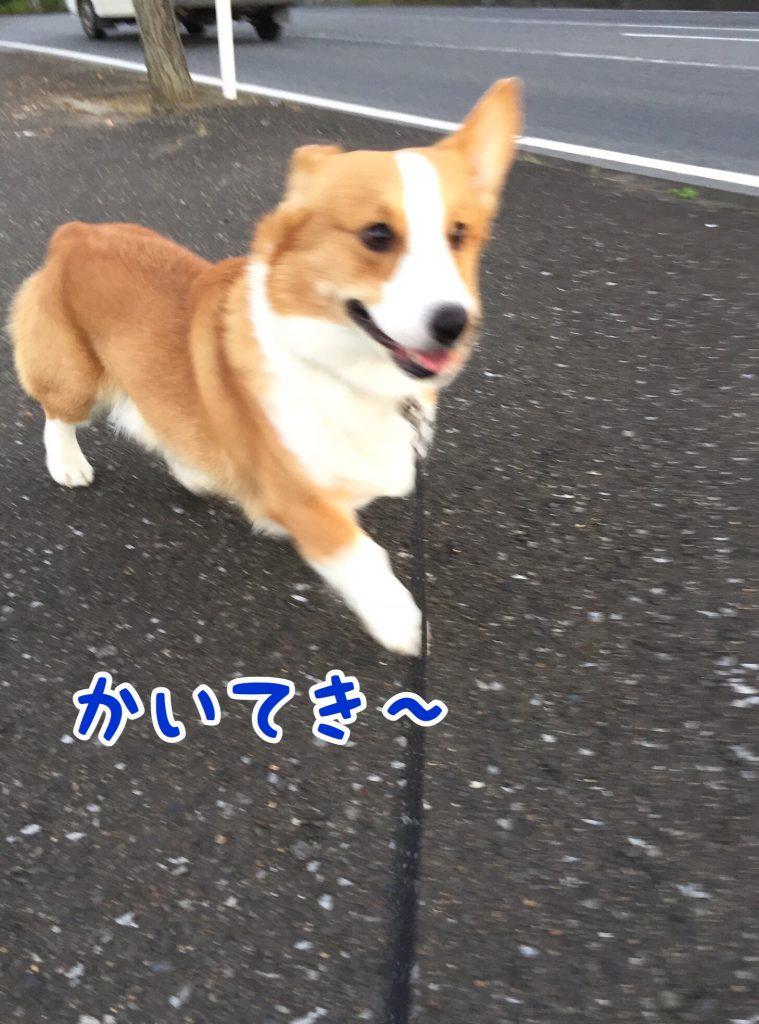 お散歩快適〜
