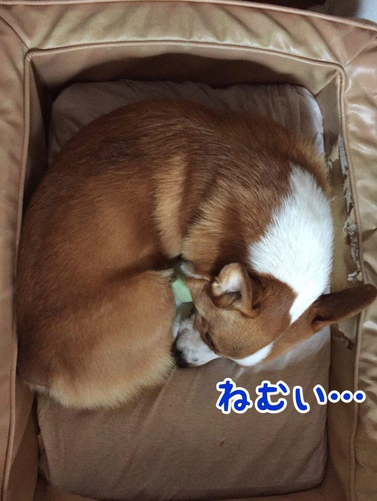 ちょっと疲れたかなぁ。ねむねむのはるさん