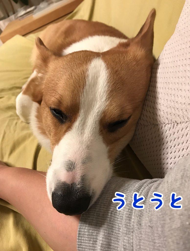腕枕でぐうぐう寝ているはる