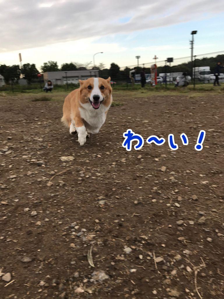 わーぃ!いっぱい走れて楽しいじょ!