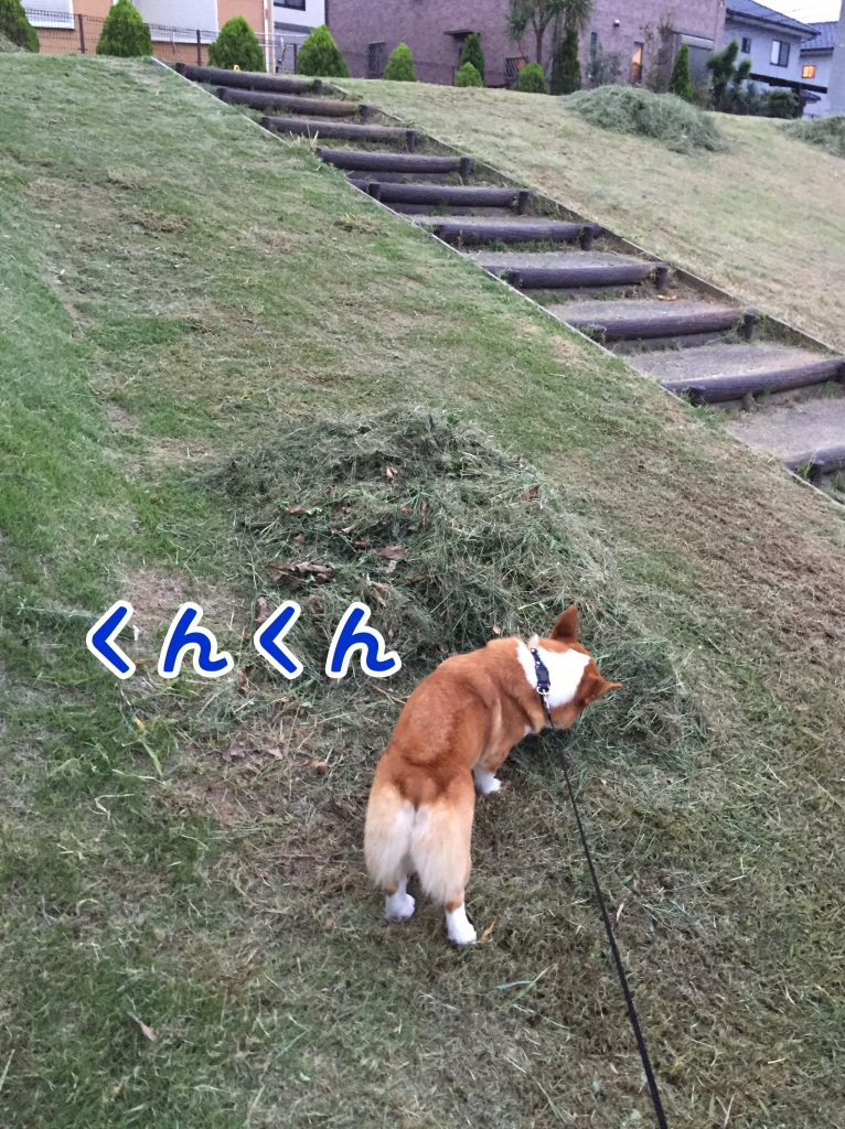 草がいっぱいだぁ、クンクンしとこ