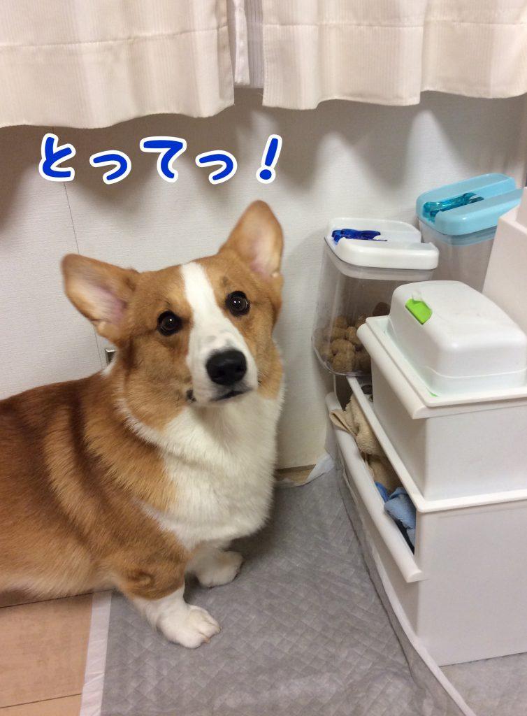 食べたいから取ってぇ〜