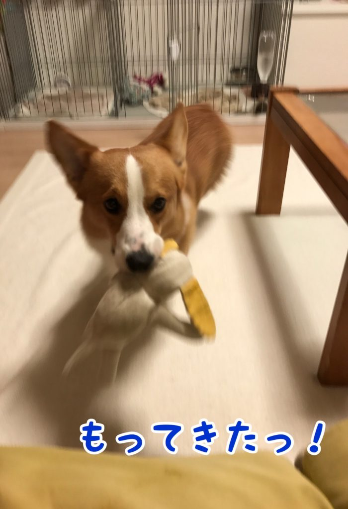 おもちゃ持ってきたよ!
