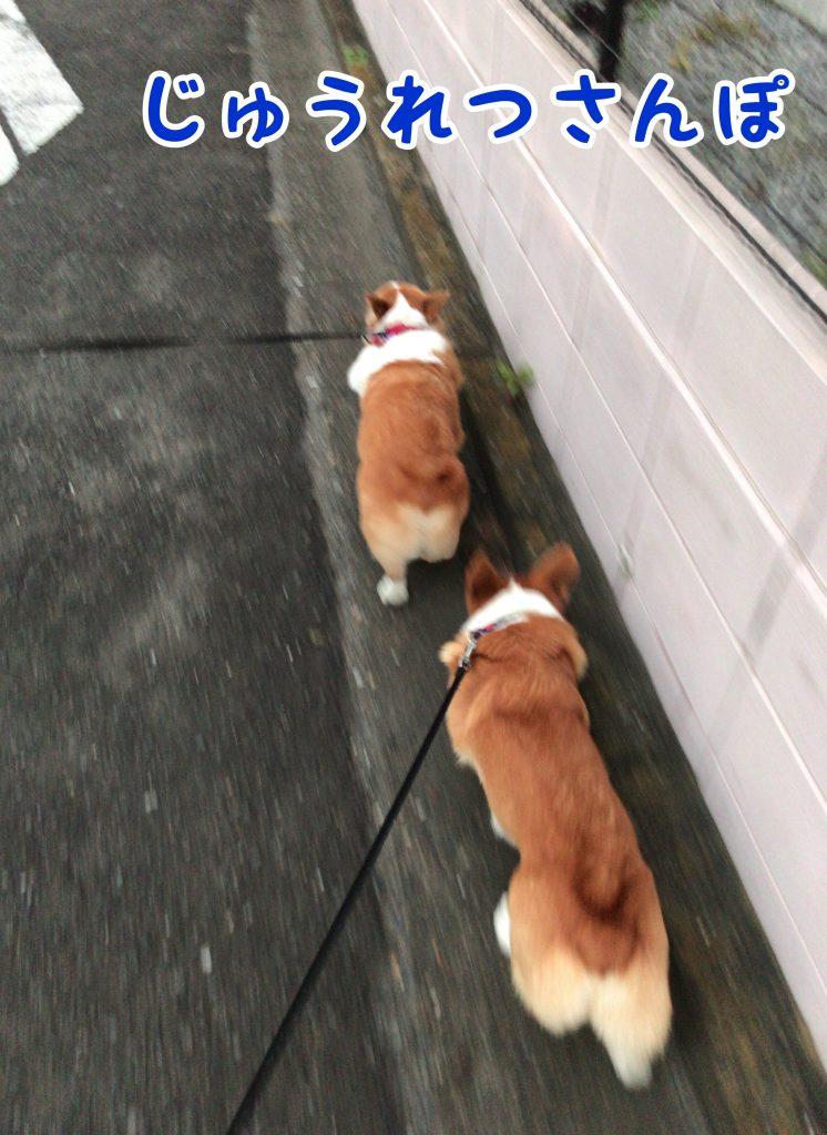 お友達と一緒にお散歩