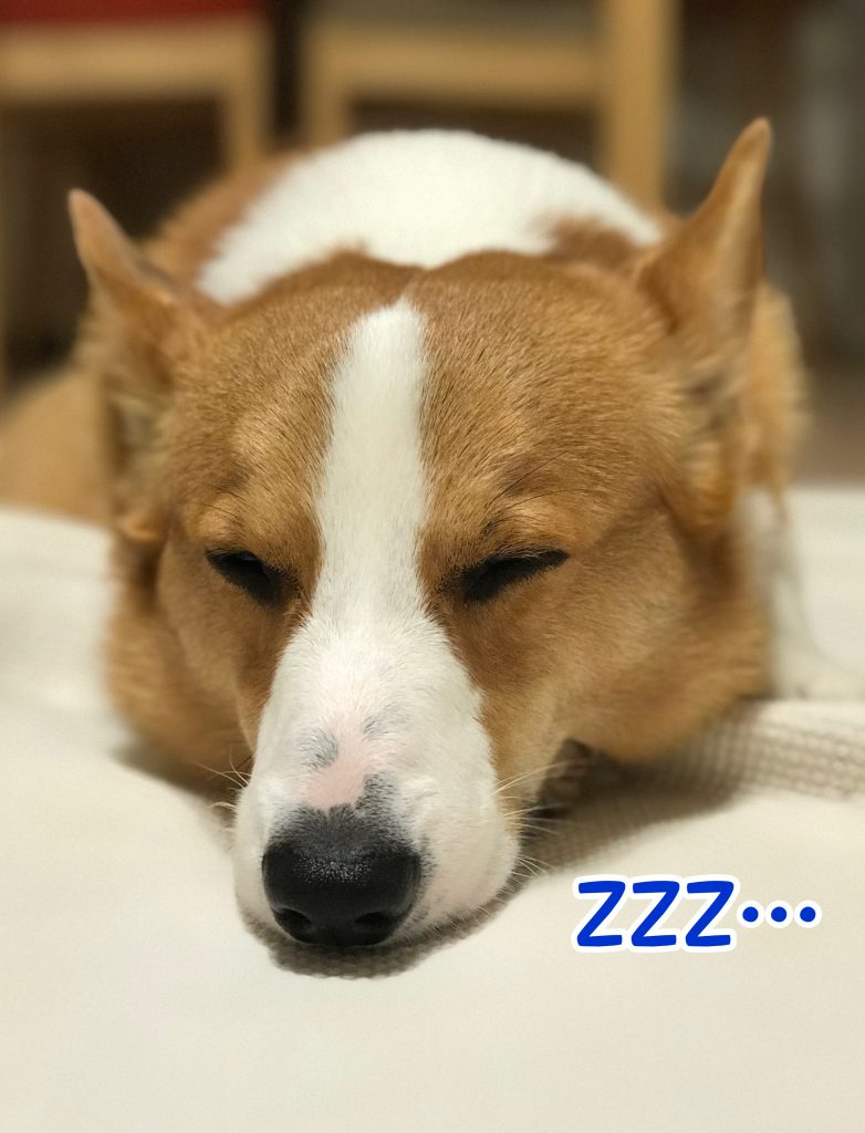 最近眠いみたい