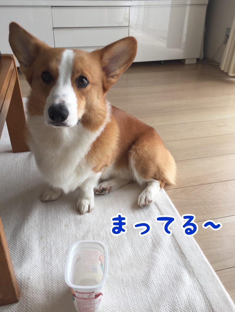 ヨーグルト食べたいなぁ