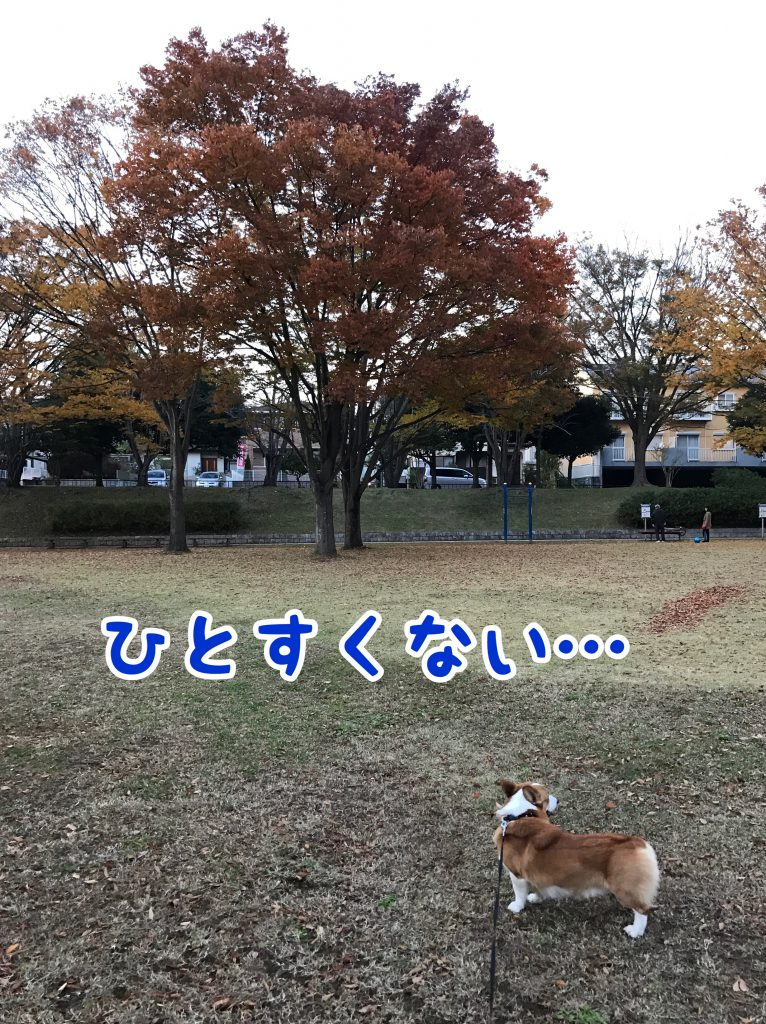 いつも行ってる公園ですが今日は人が少なかったです