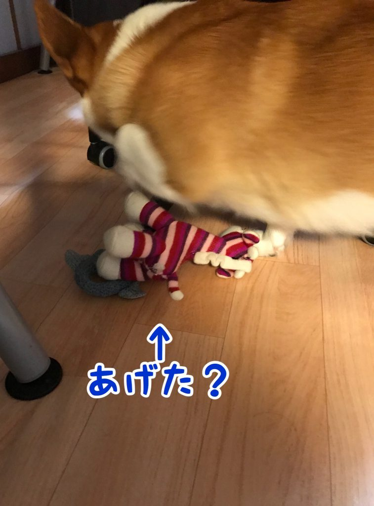 旦那さんにおもちゃをあげてました。
