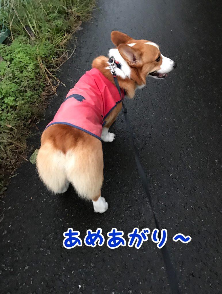 雨上がりのお散歩