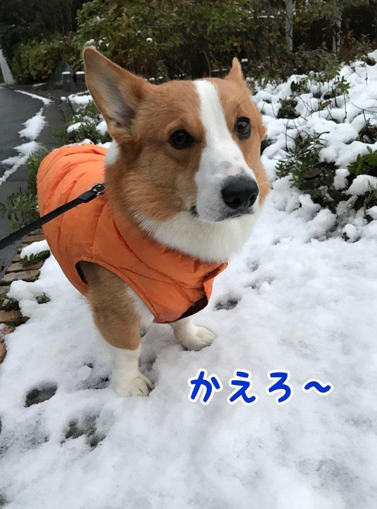 寒いよ。。帰ろうよ。。