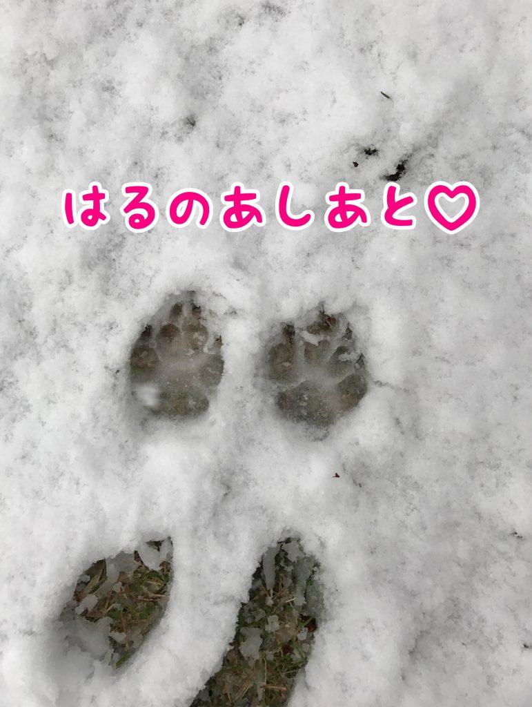 はるの足跡。かわいい。