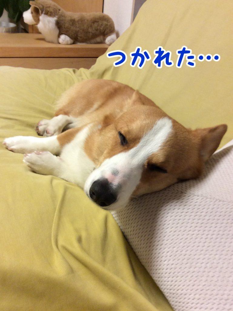 僕ちん疲れちゃった。。。