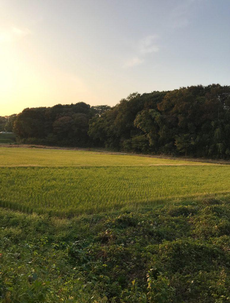 のどかな田園風景