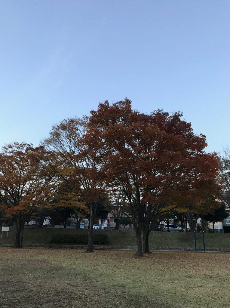 季節が変わり木々の葉も紅葉してきました