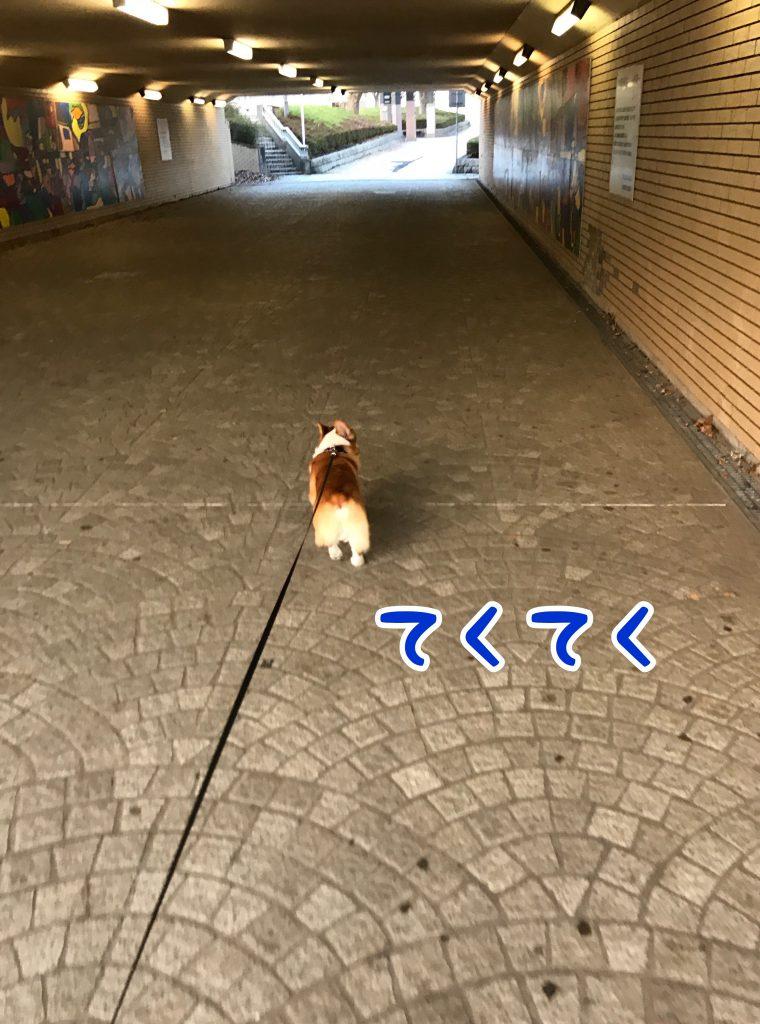 トンネルもてくてく歩くのです。歩くのです。