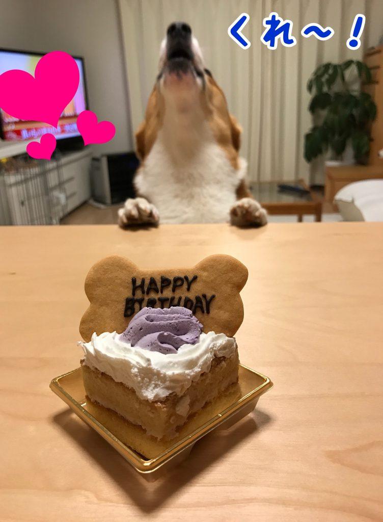 わぁ!これは僕のわんわんケーキだじょ!早くくれ!