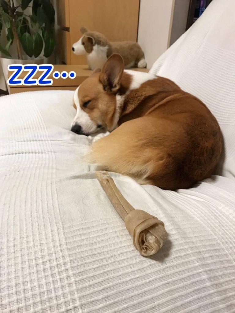 はるさん疲れて寝ちゃいました