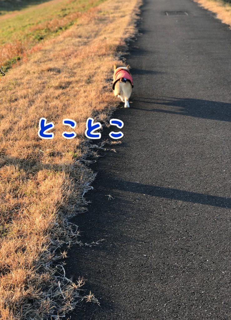 トコトコ歩くはるさん