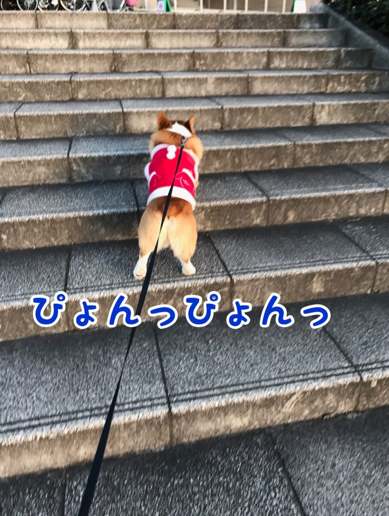 ヒャッホー!お散歩だー!ぴょんぴょん