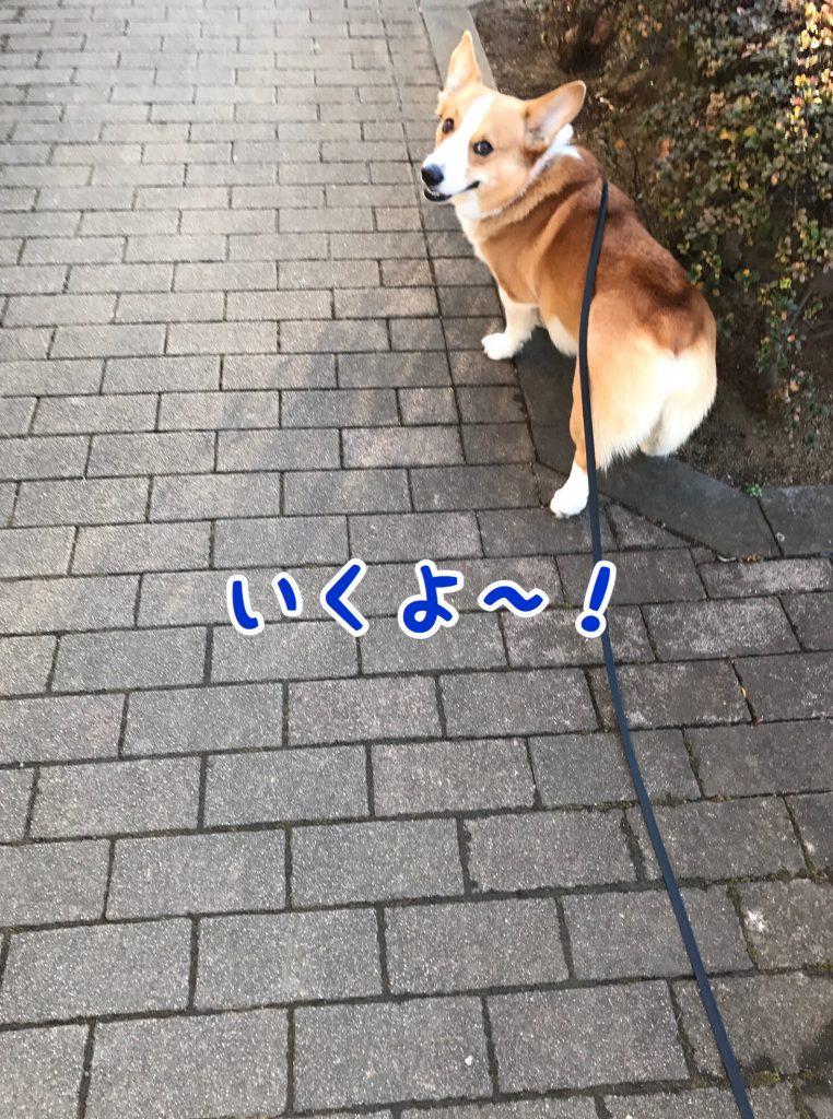 お散歩行こう!