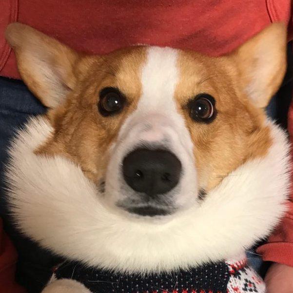 暖かそうな襟巻きですね。はるさん。