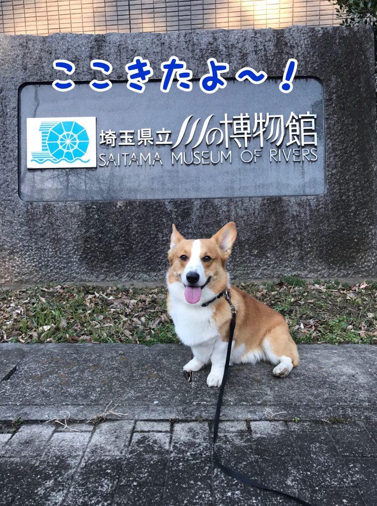 埼玉県立川の博物館に来たよ!
