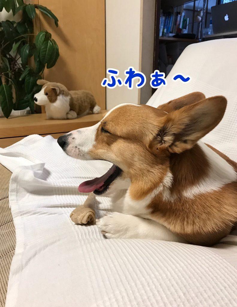 ファぁ〜眠いじょ