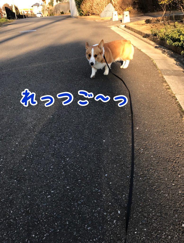 お散歩行くじょ!Let's Go!