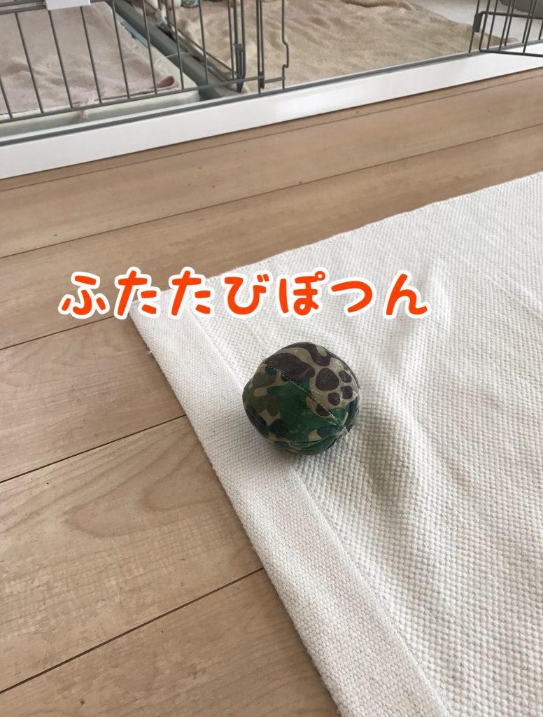 再び放置されたボールのおもちゃ