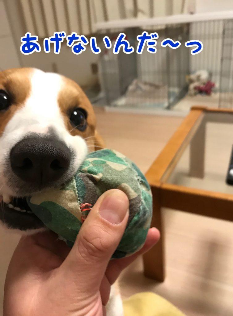今度はボールを渡してくれない・・