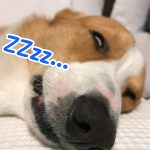 寝ているはるさんの顔がホラー映画のようでした