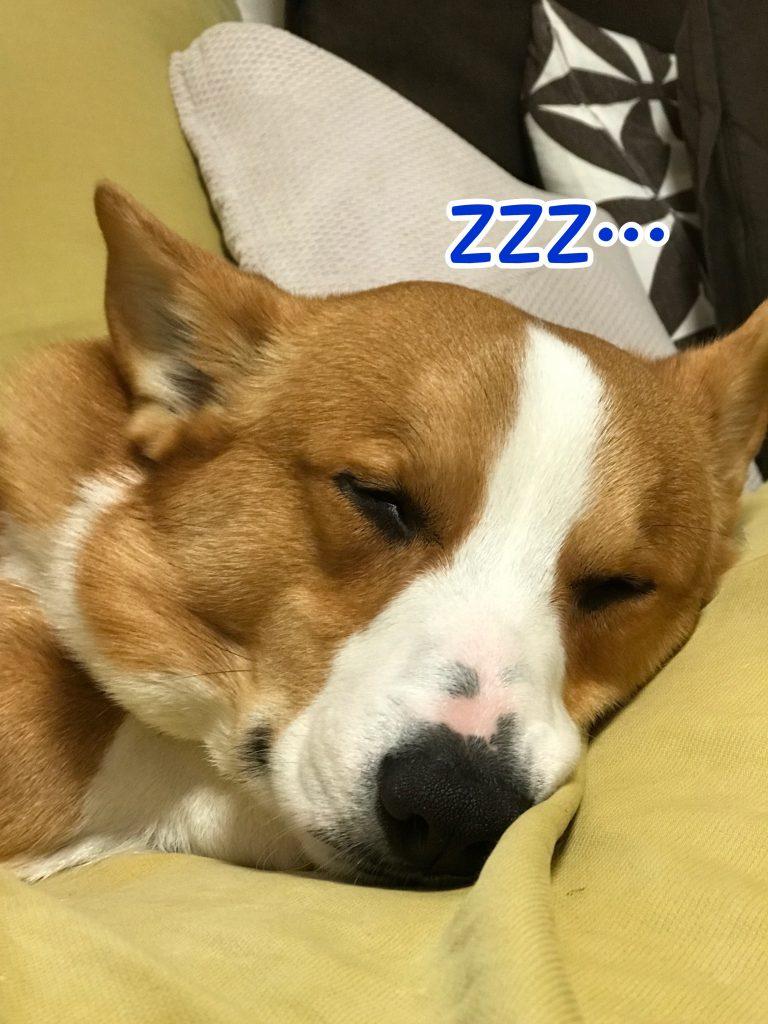 完全に熟睡しているようです