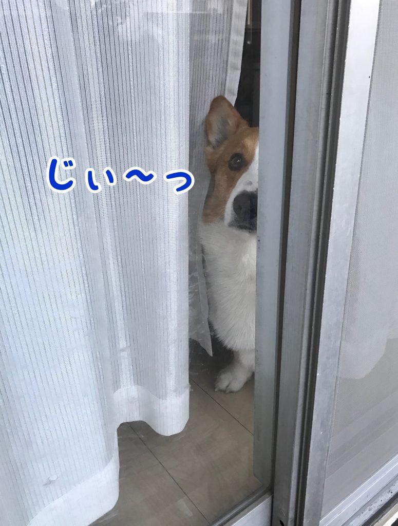カーテンの隙間からジ〜っと見つめられています。家政婦は見た?