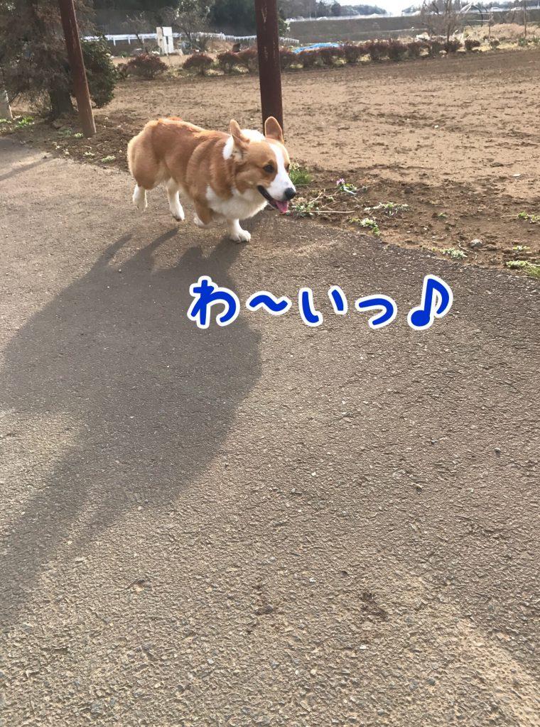 わ〜い!お散歩楽しいなぁ〜