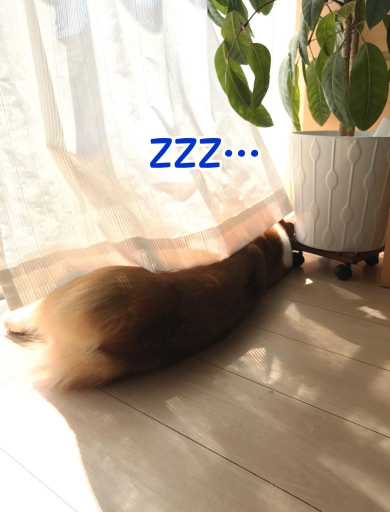 日差しが気持ちいいみたいでグウグウ寝てます