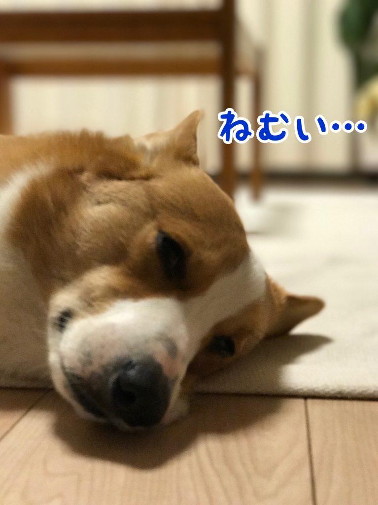 僕ちん眠いんだぁ・・・