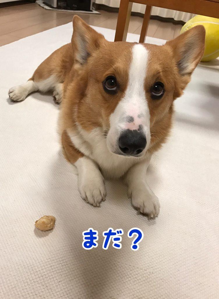まだ?もう食べていいの?